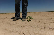 drought_legs