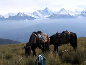 Peru-riding-horse